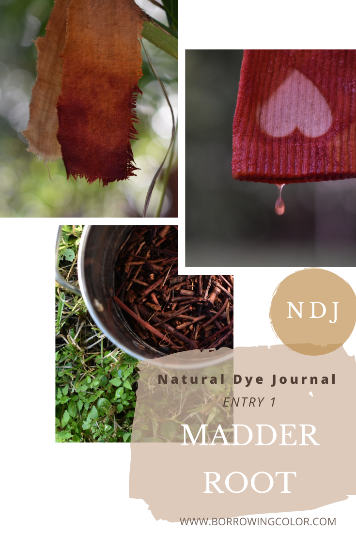 Natural Dye Journal Entry 1 - Madder Root